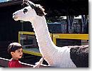 ハワイ ホノルル動物園